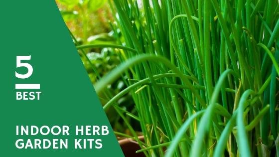 5 best indoor herb garden kits