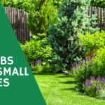 best shrubs for small spaces